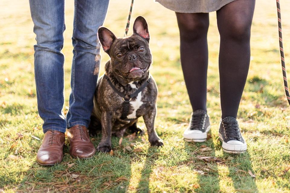 séance photo de grossesse avec un chien à lyon