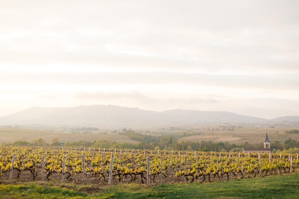 vue du chateau des ravatys sur les vignes en fin de journée