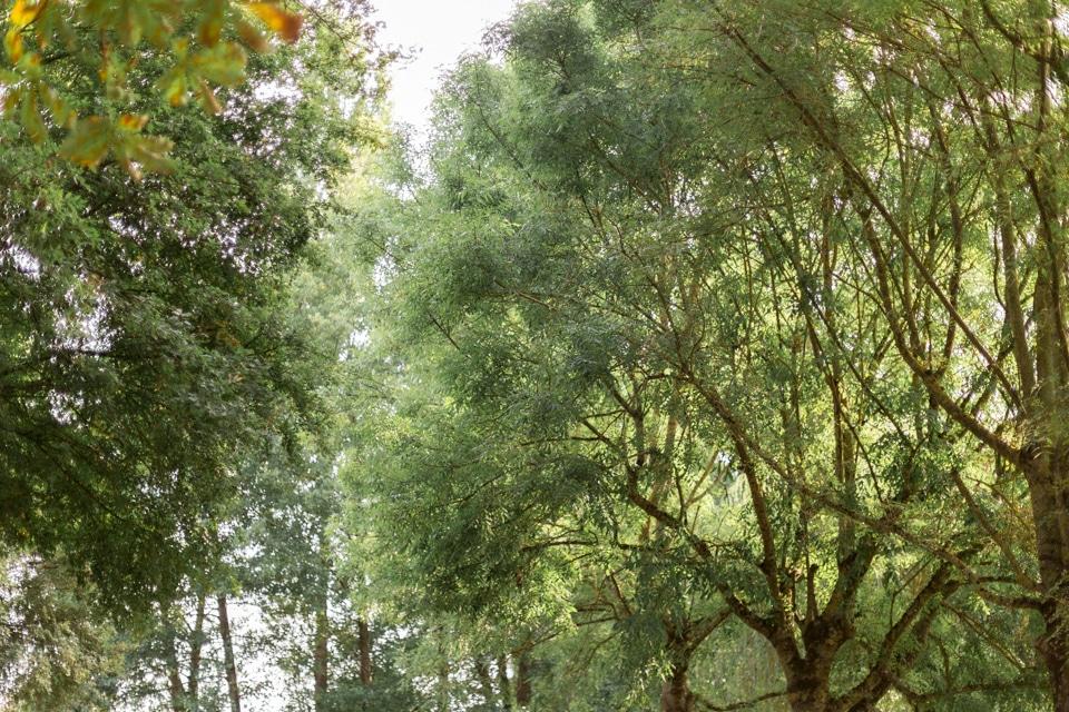 cérémonie laique sous les arbres