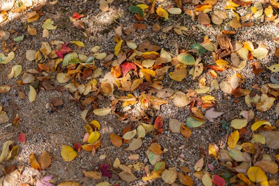 mariage en automne au domaine de vavril