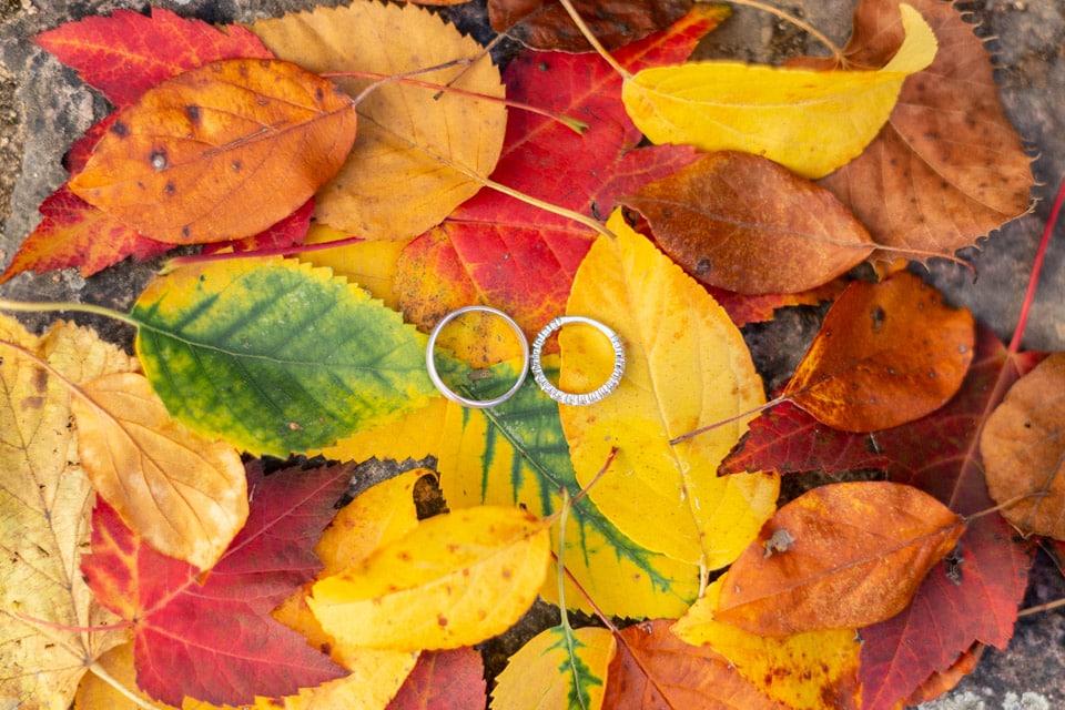 alliances sur des feuilles d'automne au domaine de vavril