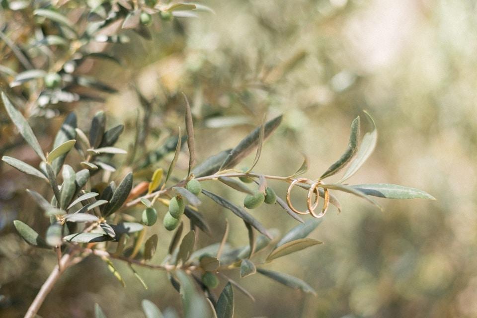 les alliances sur une branche d'olivier lors d'un mariage en provence